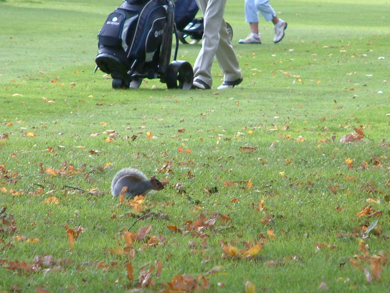 Charity Golf Day Proves A Great Success At Wellingborough Golf Club