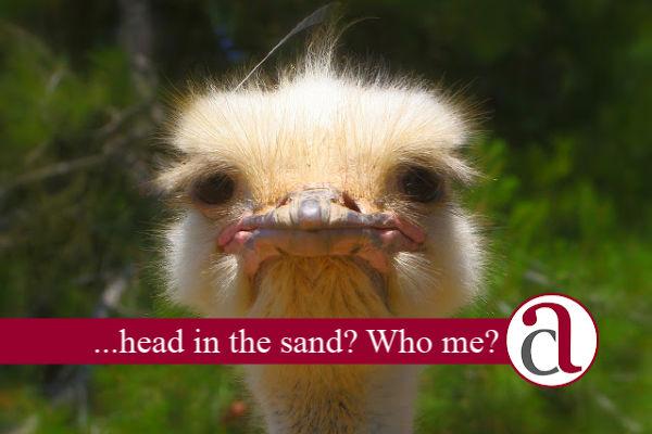 ostrich thinking about divorce