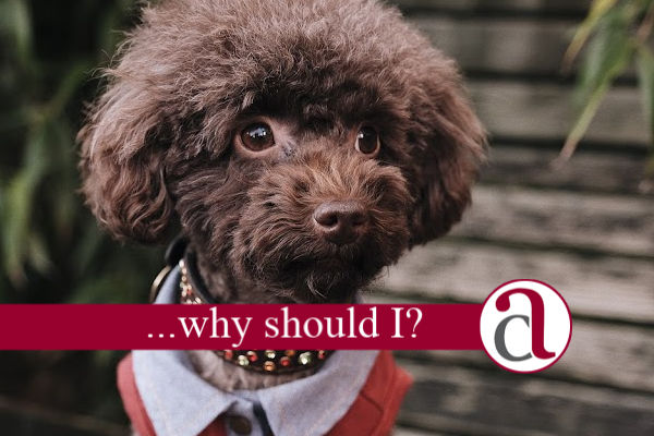 poodle thinking about an offset mortgage